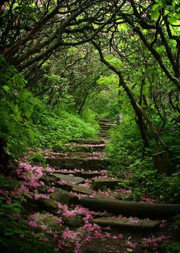 Blue Ridge Parkway Mysterious Garden Footpath, North Carolina...I would love to visit this place!