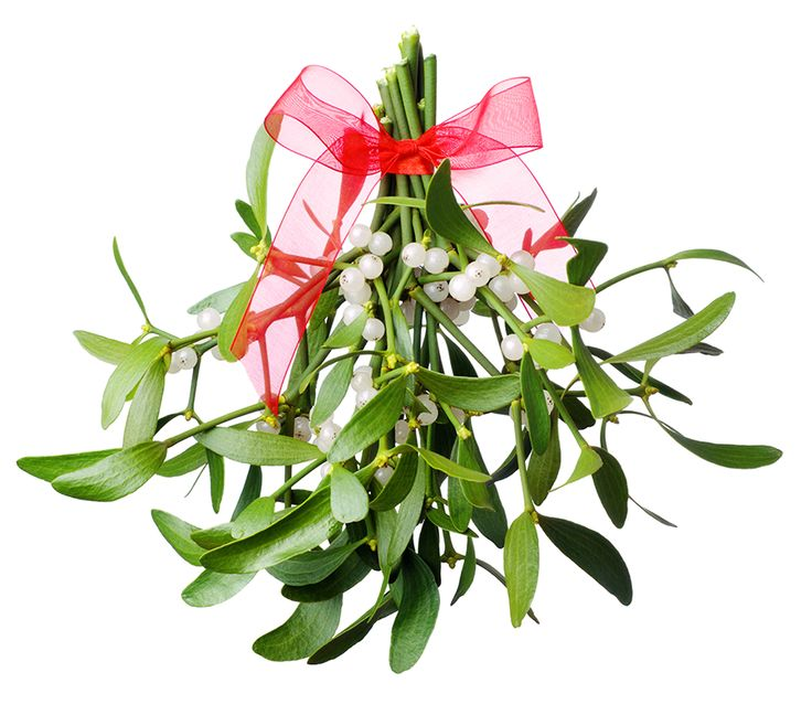 Holly, ivy, mistletoe and other festive foliage was originally used during the pre-Christian times in order to ward off evil spirits, celebrate new growth and help rejoice the Winter Solstice Festival.
