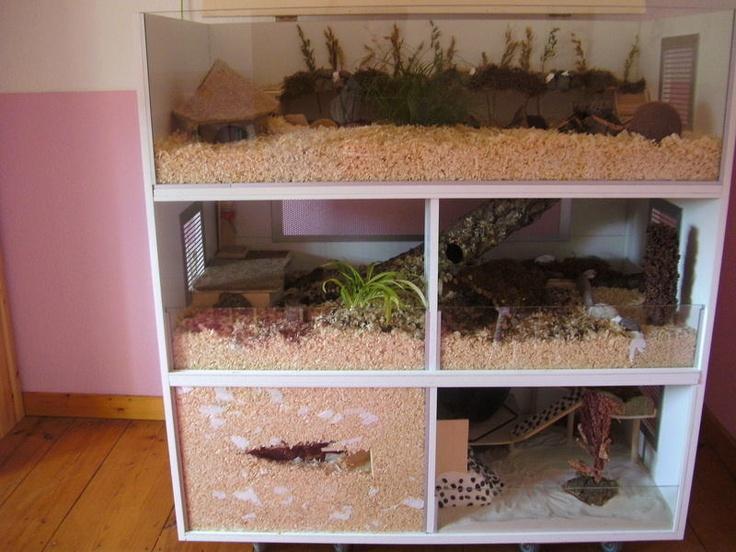 J'adore tout simplement cette cage. 3 étages de 120 x 60 cm. http://www.das-hamsterforum.de/index.php?page=Thread=123016