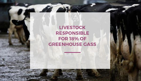 Livestock is globally responsible for 18% greenhouse gas emissions by Kerry McCarthy