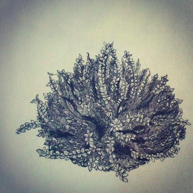 #pencil #drawing by Yuliya Noritsina