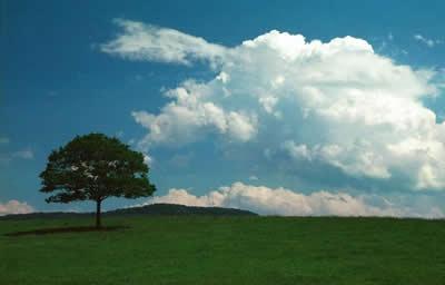 Las nubes cúmulos pertenecen a las Nubes de Crecimiento Vertical. Son nubes esponjosas de color blanco o gris y, parecen motas de algodón flotando en el cielo. Las nubes cúmulos tienen un margen bien definido y una base plana. Generalmente la base de las nubes cúmulos está a una altura de 1 000 metros y tienen 1 kilómetro de ancho.