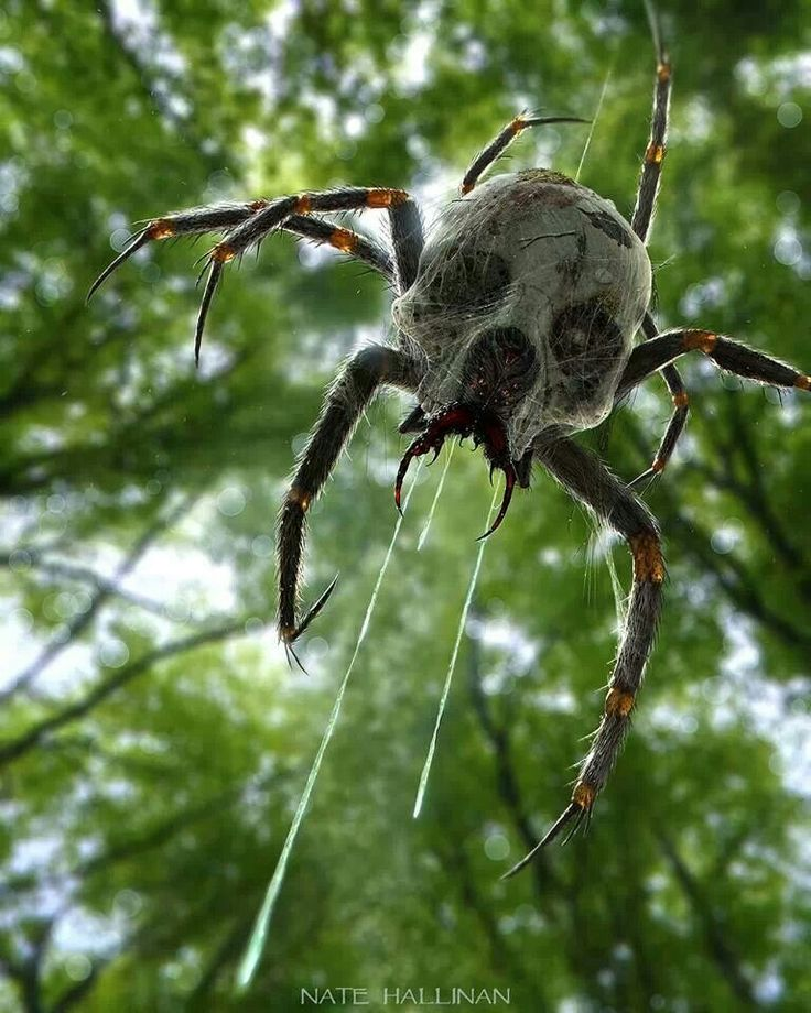 Happy Halloween: creepy spider/skull