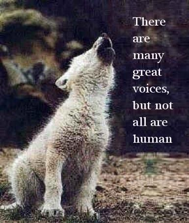 I totally love this. It howls with meaning.