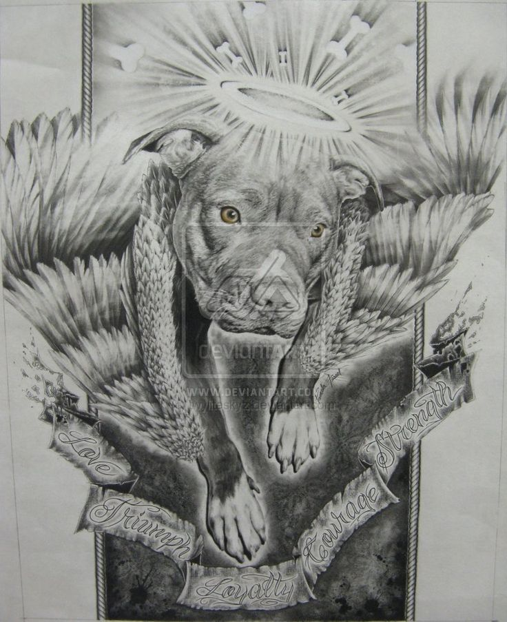 Pit Bull Pencil Drawings | pit bull angel by twyliteskyz  this is to all the pits we has lost over are IGNORANCE