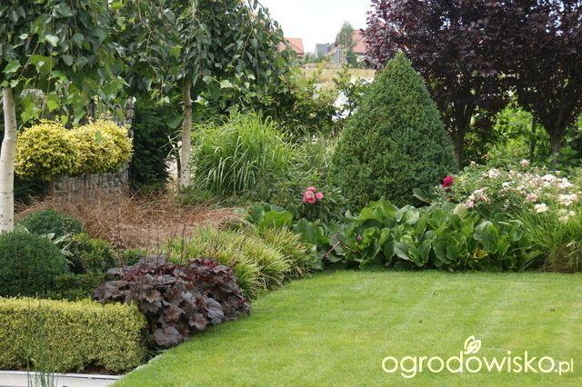 Madżenie ogrodnika cz. aktualna - strona 619 - Forum ogrodnicze - Ogrodowisko