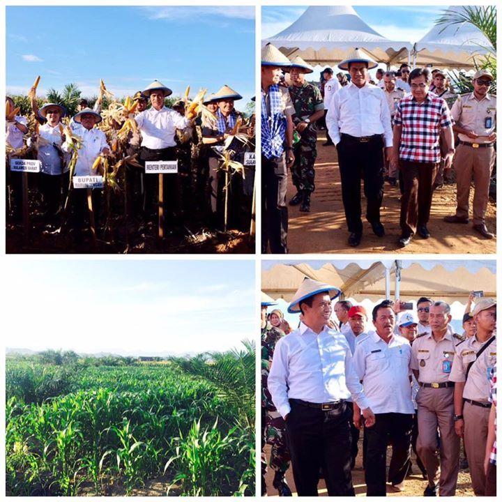 Menteri Pertanian akan perkuat 5 komoditas pangan strategis di Sulawesi Barat yakni kakao, jagung, sawit, sapi dan padi  http://www.pertanian.go.id/ap_posts/detil/924/2017/04/27/13/21/55/Perkuat%20Pangan%20Di%20Sulbar-%20Mentan%20Dorong%20Pengembangan%20Kakao-%20Sawit-%20Jagung-%20Sapi%20dan%20Padi #PetaniSejahtera