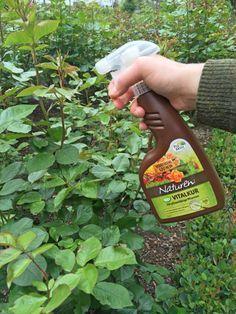 Wer im Garten auf Chemikalien verzichten möchte, kann dank natürlicher Mittel …   – Kreative ideen