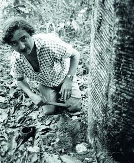 Chico Mendes é um herói pois nunca desistiu de Lutar pelo seus ideais, até no momento da morte ele apoiou os seringueiros, trabalhadores e a preservação da Floresta Amazônica