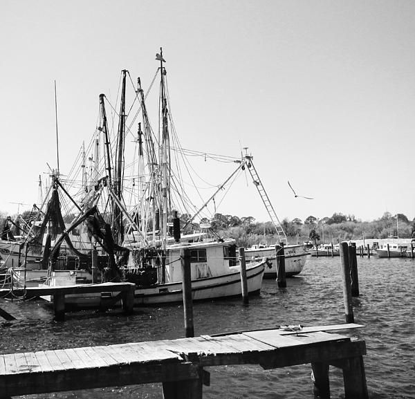Commercial fishing boats in apalachicola florida black for Commercial fishing florida