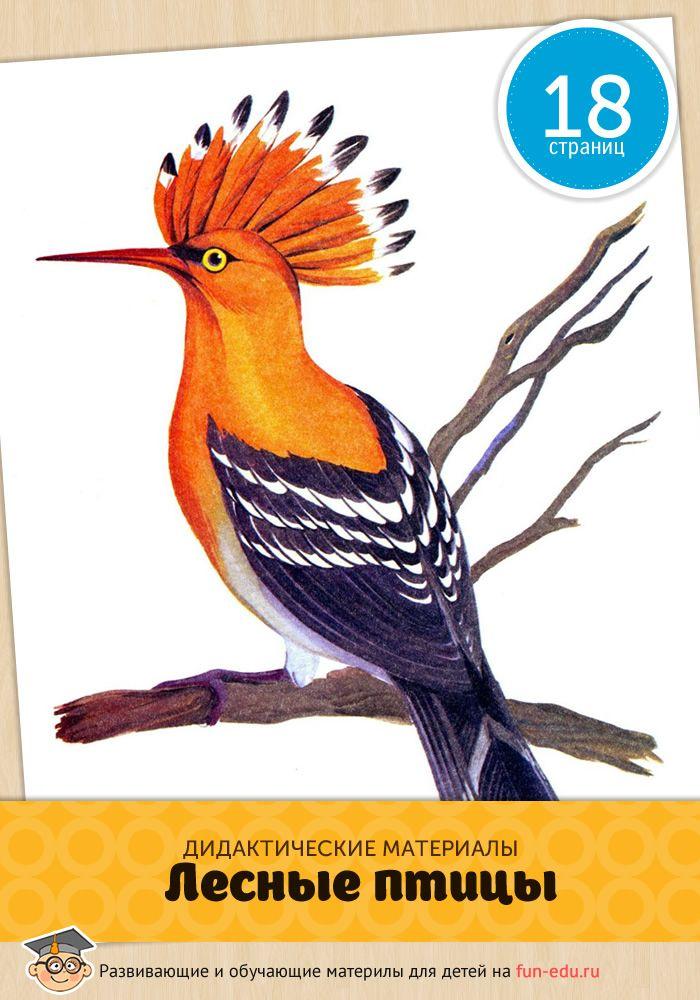Лесные птицы — картинки, предназначены для приобретения детьми знаний по окружающему миру. Скачайте 18 картинок высокого качества и используйте на занятиях.
