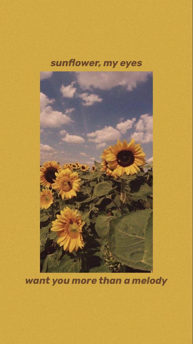 sunflower, vol.6♡ in 2020 | Harry styles wallpaper ...