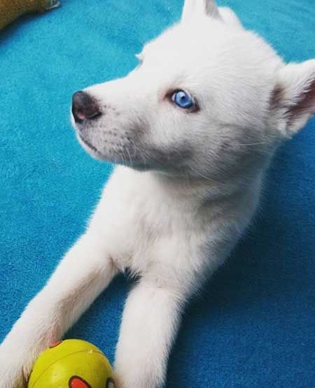 28 dogs with blue