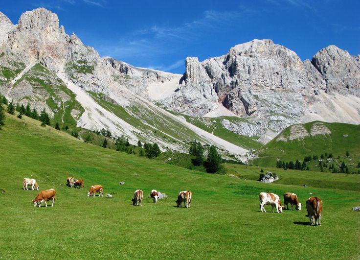 Paesaggio di montagna con mucche al pascolo montagna for Piccoli disegni di baite di montagna
