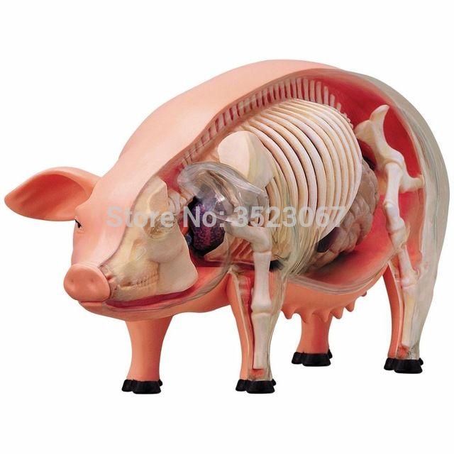 <b>4D мастер</b> видения свинья анатомия модель 19 съемные части ...