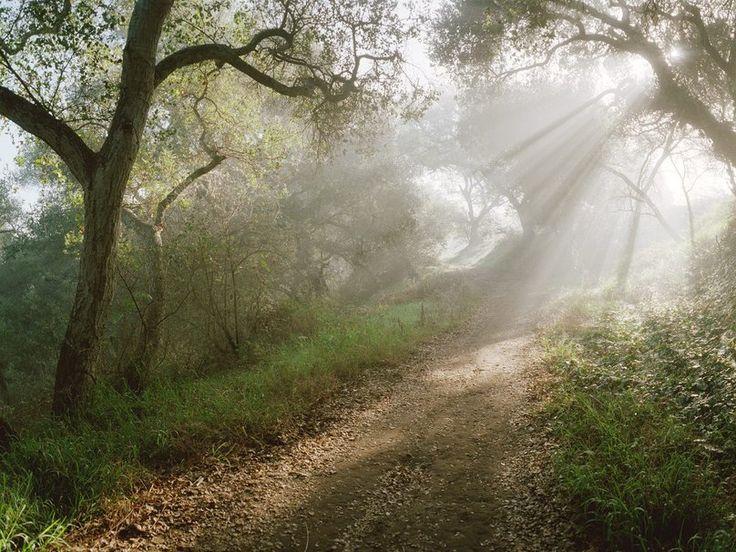 Природа, свет, деревья, Калифорния, лес, Санта-Барбара вектор