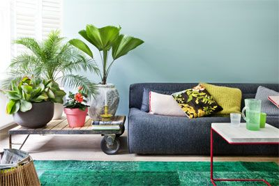 Binnentuintje met kamerplanten  Visite altijd welkom, maar planten zijn ook goed gezelschap in huis. Qua gezelligheid maar ook letterlijk, want ze zuiveren de lucht en hebben een weldadige uitwerking.  Zet ze voor een zo groot mogelijk oase-effect bij elkaar, bij voorkeur op een lichte plek. Wissel hoge exemplaren af met lage en varieer in bladvormen. Van links naar rechts: Kalanchoë, Mexicaanse dwergpalm (Chamaedorea), Chinese roos (Hibiscus) en waaierpalm (Licuala).