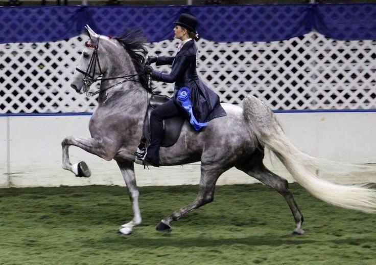 Divine Asset, Jacqueline Beck up - Amateur 5-gaited class @ American Royal