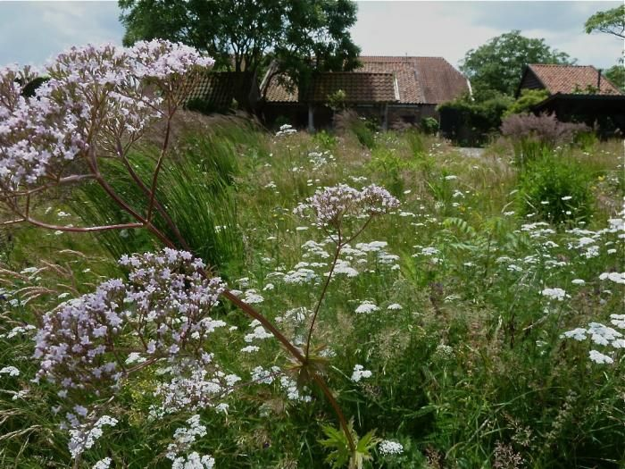 44 best images about garden meadows grass lawns open for Piet oudolf private garden
