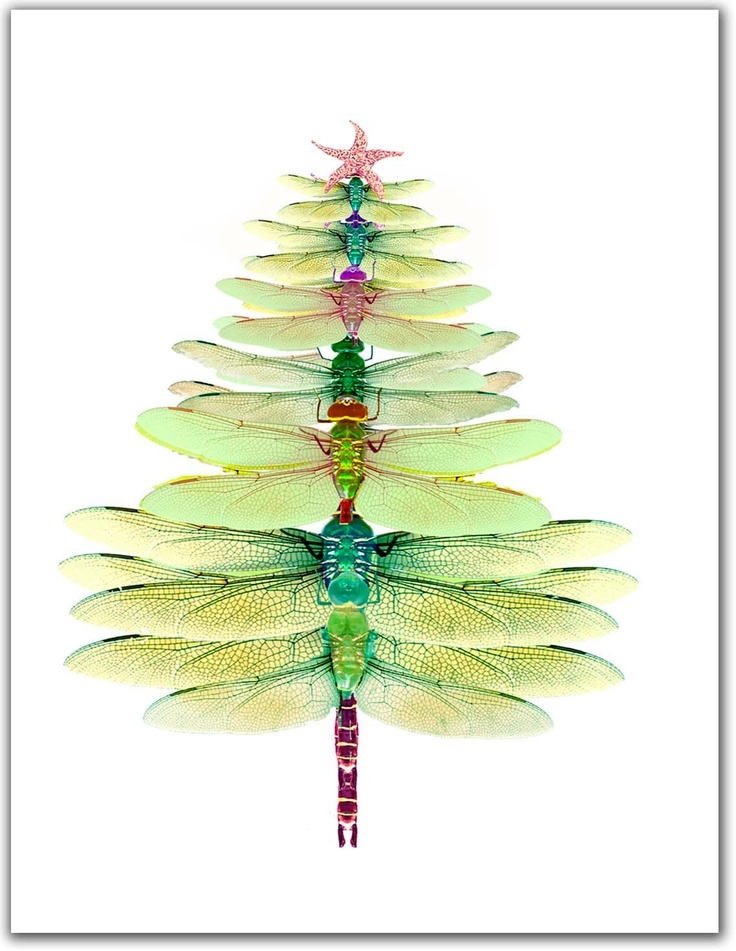 17 Best Images About Dragonfly On Pinterest Dragonfly