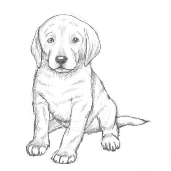 welpe zeichnendekoking9  hund zeichnen hund malen