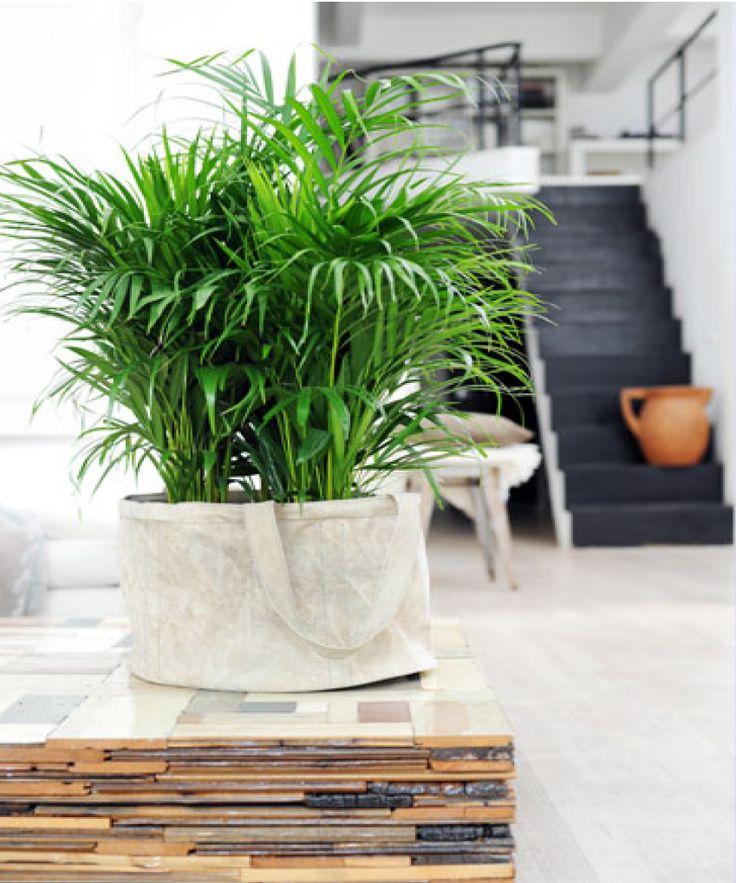 quelle plante pour la salle de bain affordable plantes pour salle de bain pour deco salle de. Black Bedroom Furniture Sets. Home Design Ideas