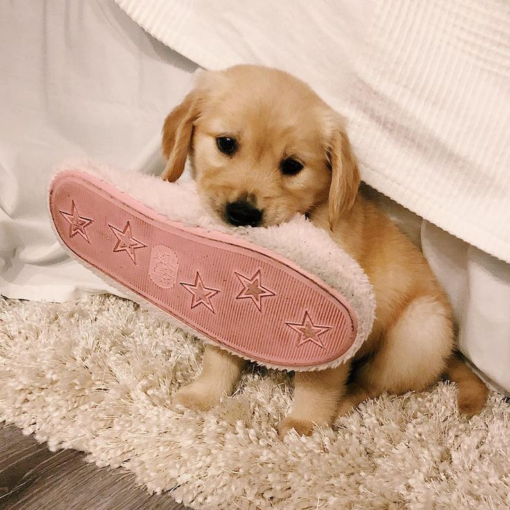 Is This The Slipper You Couldn T Find I Had It Under The Bed For