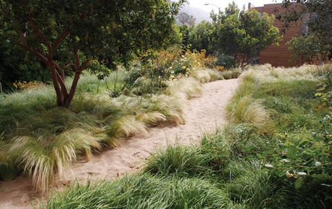 Love the softness of the grasses along this path.