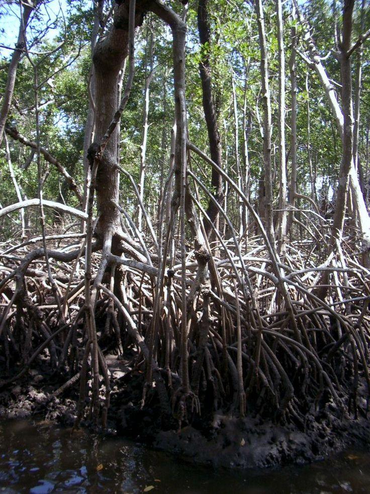Swamp tour, Naples, Florida