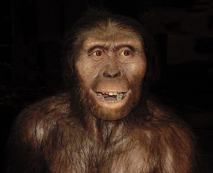 Resultado de imagen de De una hembra de Australopithecus afarensis