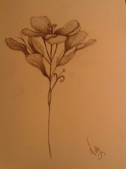 Apuesta de las flores de mi jardín  #flower #draw