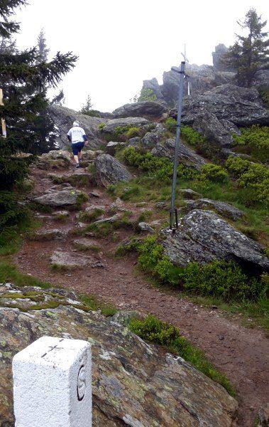 Der König im Bayerwald beim Ultratrail Lamer Winkel am 30.05.2015 - Laufen wie ein König - Bildbericht von Thomas Eller: http://laufspass.com/laufberichte/2015/utlw-bayerwald-koenig.htm