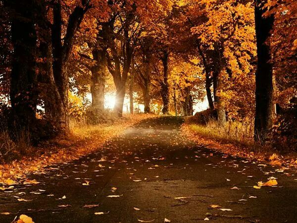 The golden path.