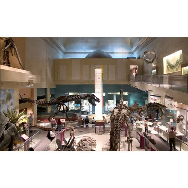 Smithsonian Dinosaur ❤ liked on Polyvore featuring charter bus and charter bus service