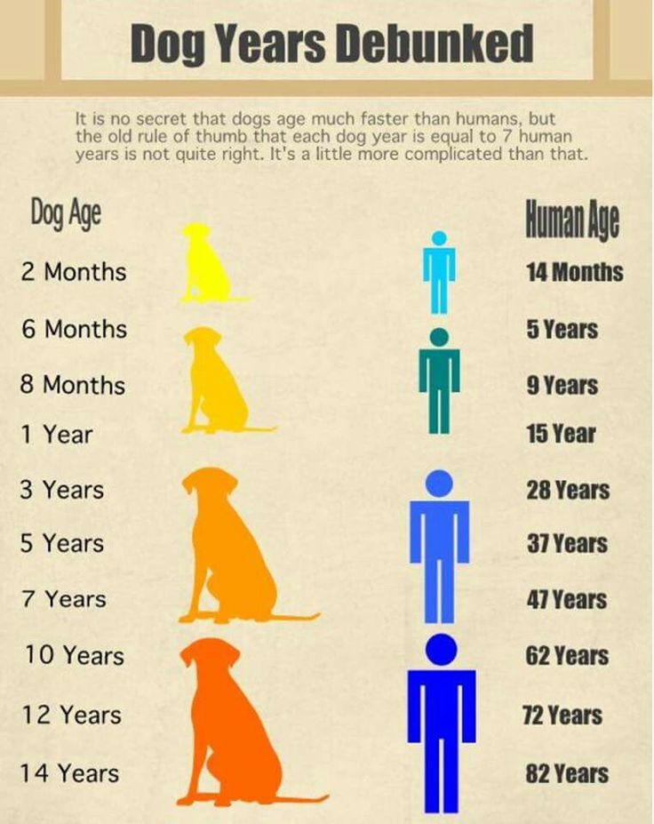 what is my age in dog years