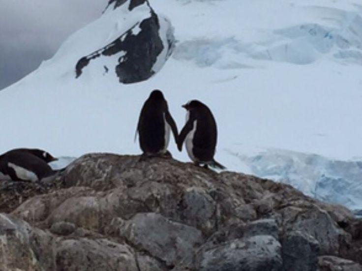 #Antartica lovers