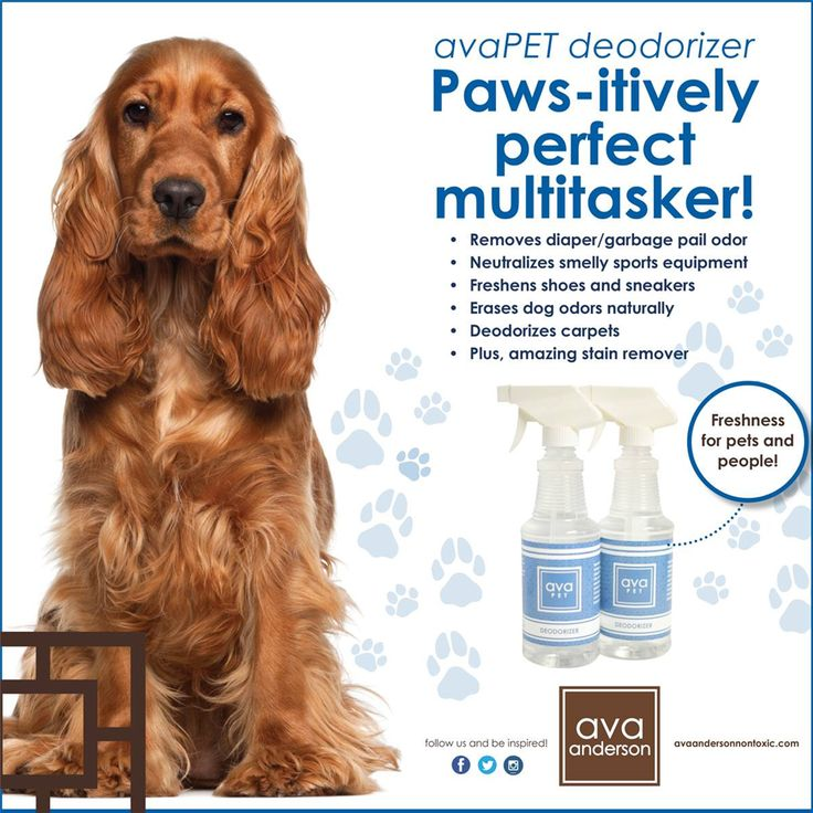 Today is NATIONAL DOG DAY and since I love both dogs and the avaPET product line, I am doing a giveaway!  All orders placed TODAY will be entered into drawing to win FREE avaPET product of your choice! Choose the very versatile pet deodorizer or the amazing smelling pet shampoo!  On top of that, I am doing a fundraiser for Great Dog Rescue and 20% of all sales for the month of August are being donated to the rescue! So...buy today and get some amazing non toxic products, raise money for…