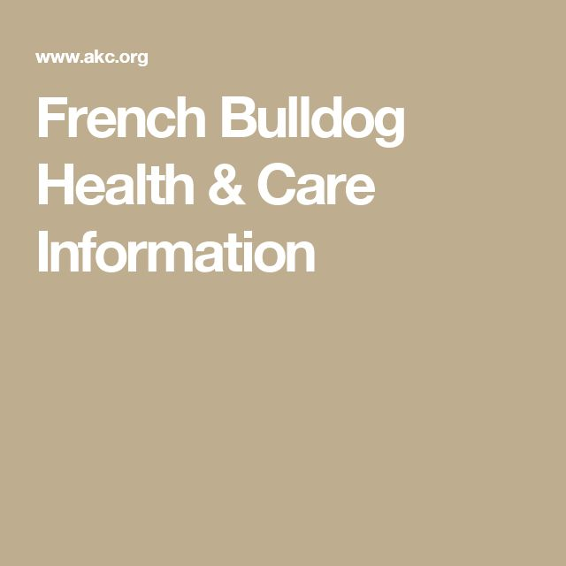 French Bulldog Health & Care Information