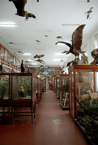 Ornithological Collection. Natural History Museum. Cluj-Napoca, Romania.