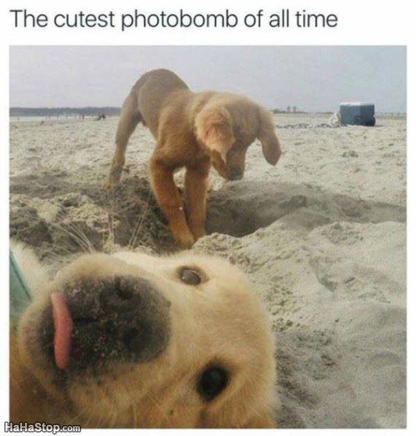 Cutest Photobomb - more at megacutie.co.uk