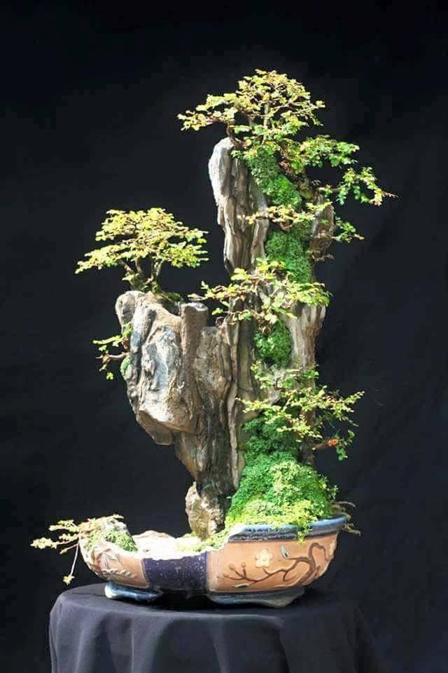 350 best bonsai suiseki scholar 39 s stone images on. Black Bedroom Furniture Sets. Home Design Ideas