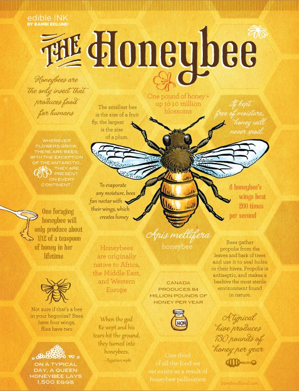 The Humble Honeybee need not bee so humble. They ROCK, and we'd be screwed without them!