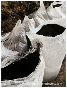 """Este fácil truco para que tus plantas crezcan más rápido puede sonar a receta secreta pero dicho """"secreto"""" no es tal para mucha gente. Se basa en algo muy conocido, reconocido y experimentado por muchos jardineros, el humus de lombriz. Sencillamente consiste en aprovechar al máximo este humus preparándolo en infusiones que podemos usar para fertilizar y mejorar la tierra de nuestro jardín o macetas.  Los pesticidas y fertilizantes químicos son efectivos, no hay ninguna duda al respecto, el…"""