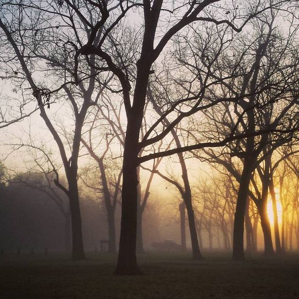 Early morning. Good day ahead. #photography #naturephotography #trees #sunrise #fog #goodmorning