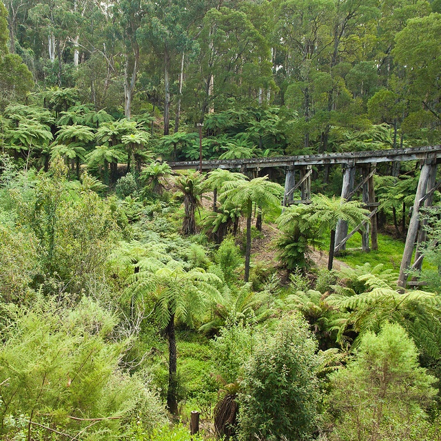 Puffing Billy track through the Dandenong Ranges