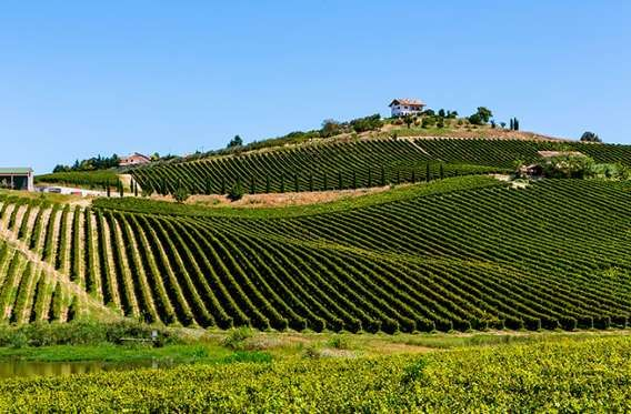 Nestled in the hills above the Adriatic coast just east of Rome, you'll find a wine region that turn... - Abruzzo