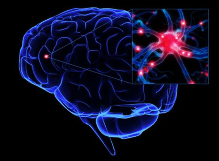 Sialic acid may play significant role in certain brain disorders - http://brainmysteries.com/sialic-acid-may-play-significant-role-certain-brain-disorders/