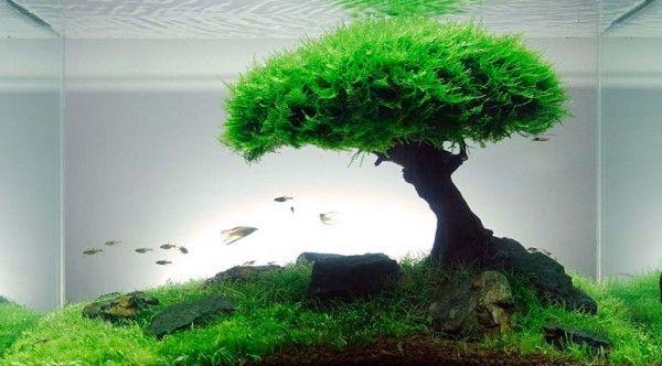 "Learn how to design an ""aquascape"" for your aquarium! #green #DIY #garden"