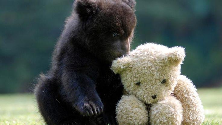 Bear with Teddy Bear