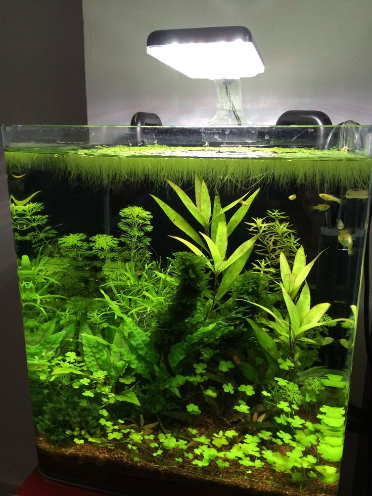 61 best walstad method images on pinterest planted for Fish tank ice method